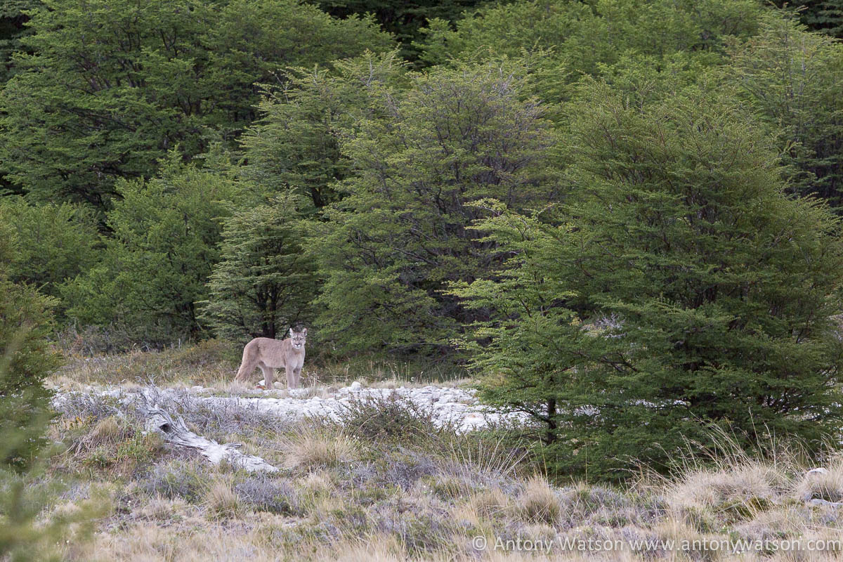 Puma - Patagonia Poincenot Fitz Roy